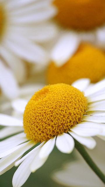 цветы для Nokia 5800